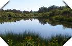 Lagoas de Bertiandos e São Pedro de Arcos